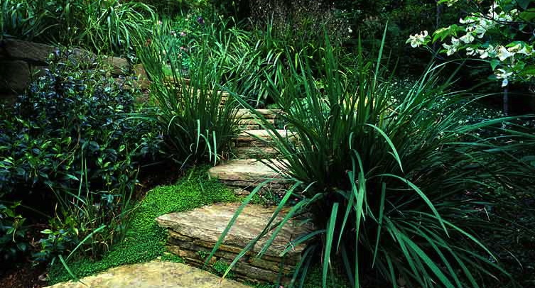 Pathway-Steps-for-web